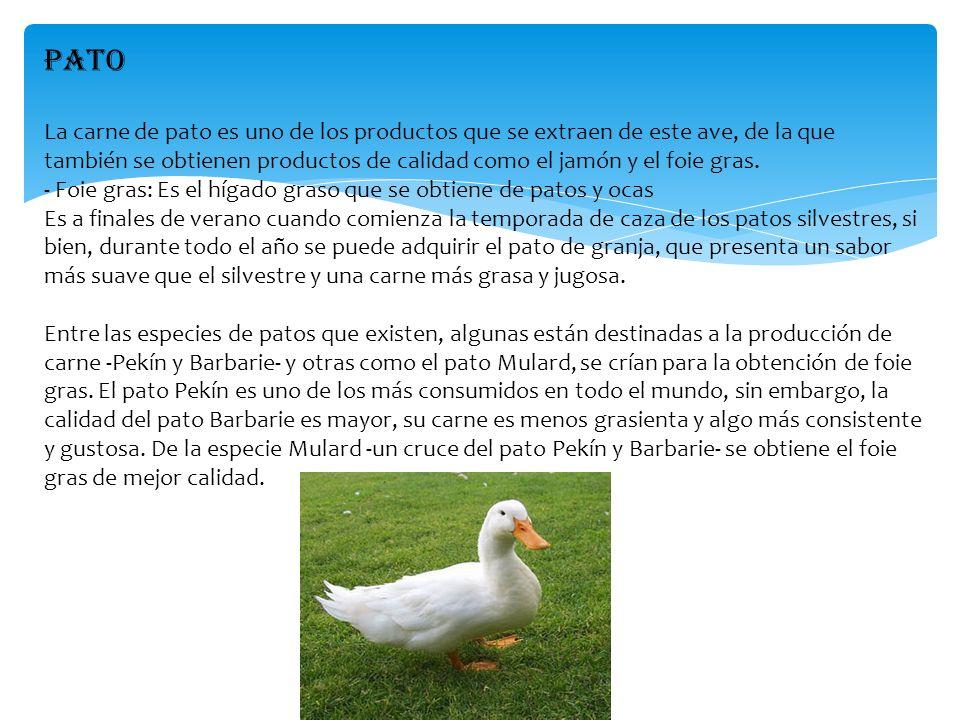 PATO La carne de pato es uno de los productos que se extraen de este ave, de la que también se obtienen productos de calidad como el jamón y el foie g