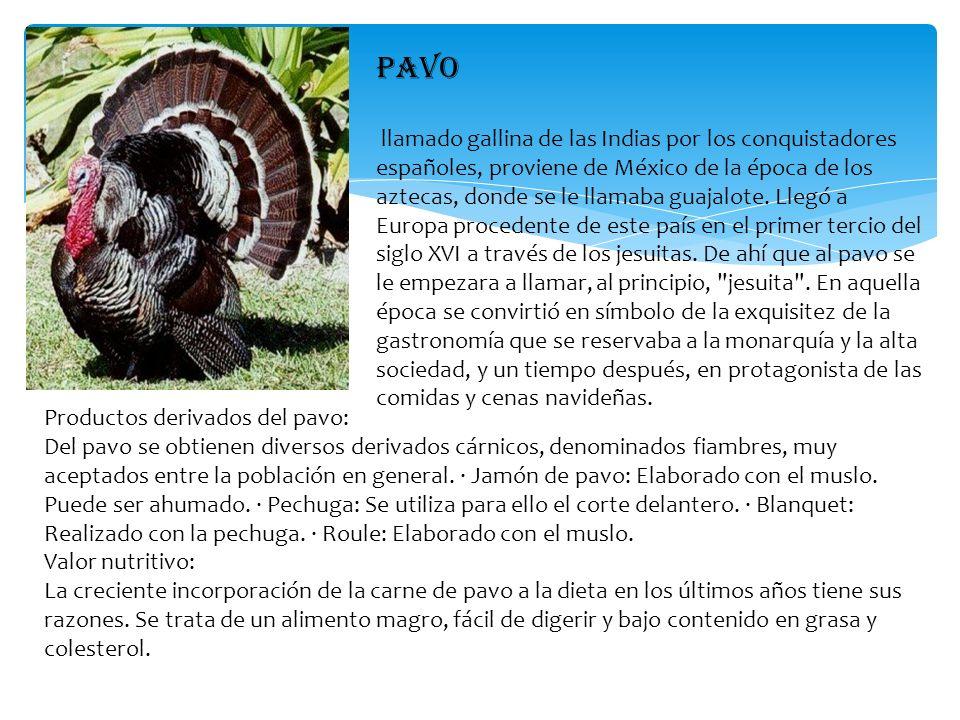 PAVO llamado gallina de las Indias por los conquistadores españoles, proviene de México de la época de los aztecas, donde se le llamaba guajalote. Lle