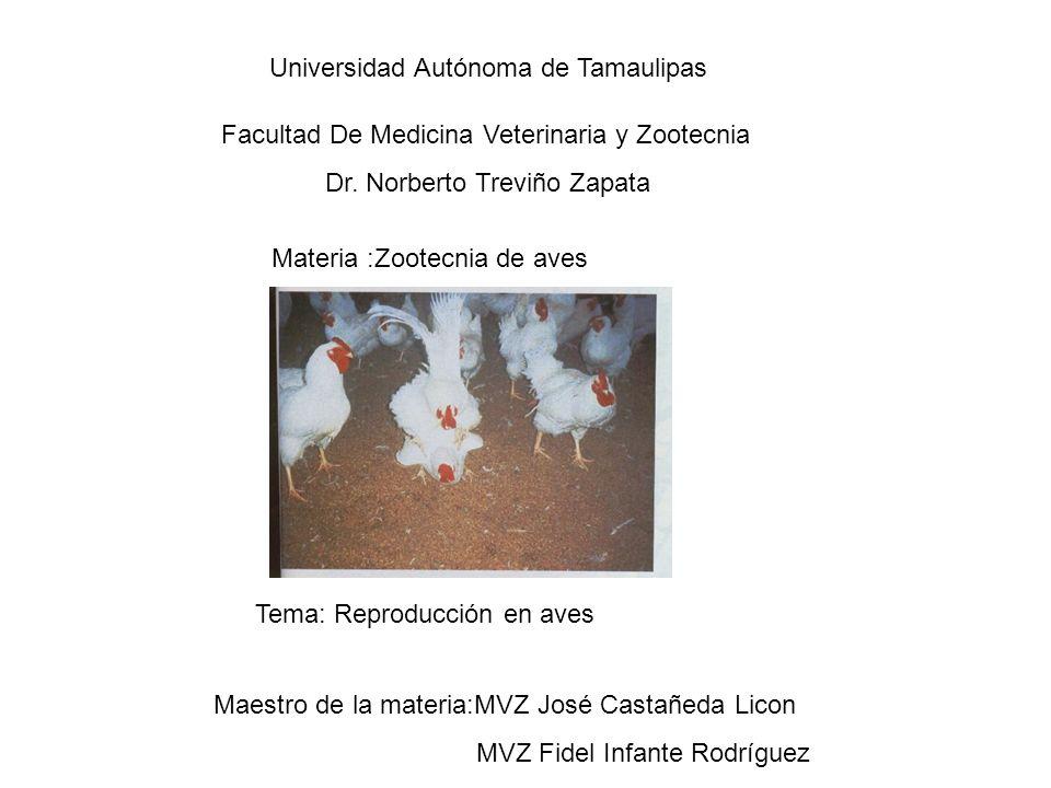 Tema: Reproducción en aves Universidad Autónoma de Tamaulipas Facultad De Medicina Veterinaria y Zootecnia Dr.
