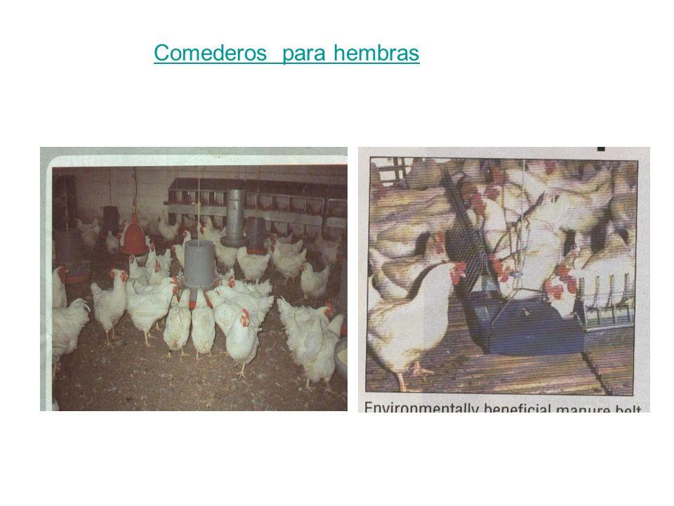 Comederos para hembras