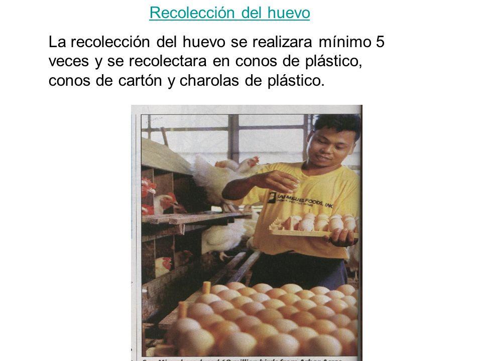 Recolección del huevo La recolección del huevo se realizara mínimo 5 veces y se recolectara en conos de plástico, conos de cartón y charolas de plástico.