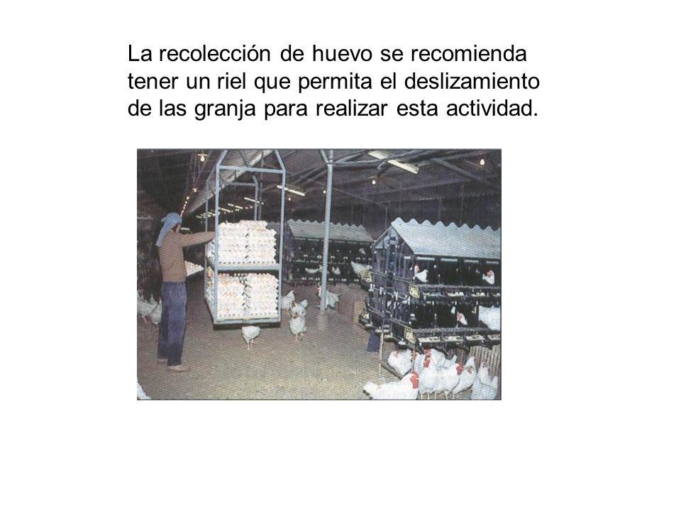 La recolección de huevo se recomienda tener un riel que permita el deslizamiento de las granja para realizar esta actividad.