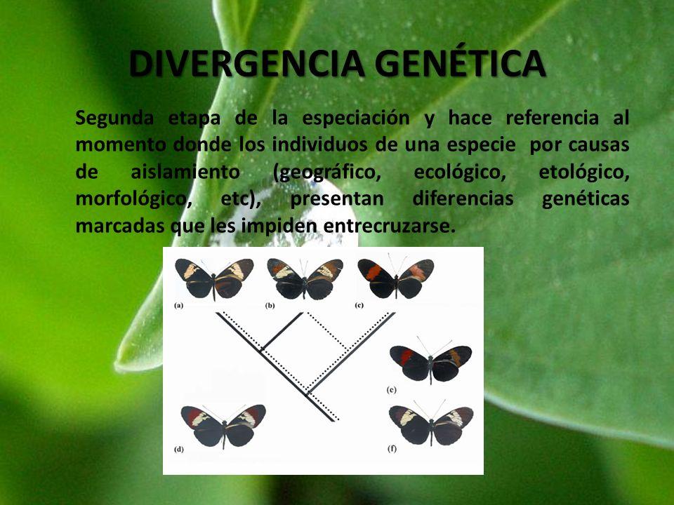 DIVERGENCIA GENÉTICA Segunda etapa de la especiación y hace referencia al momento donde los individuos de una especie por causas de aislamiento (geogr