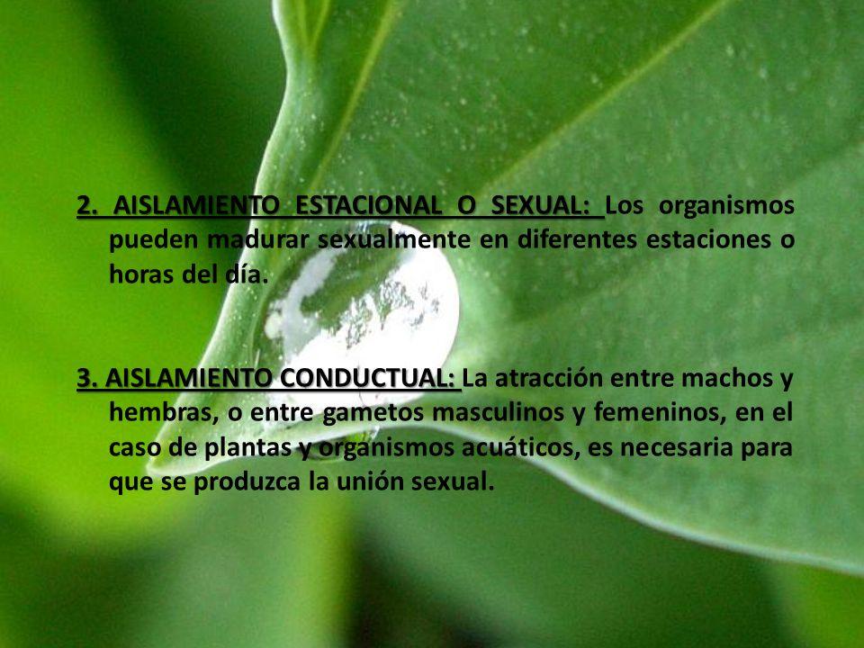 2. AISLAMIENTO ESTACIONAL O SEXUAL: 2. AISLAMIENTO ESTACIONAL O SEXUAL: Los organismos pueden madurar sexualmente en diferentes estaciones o horas del