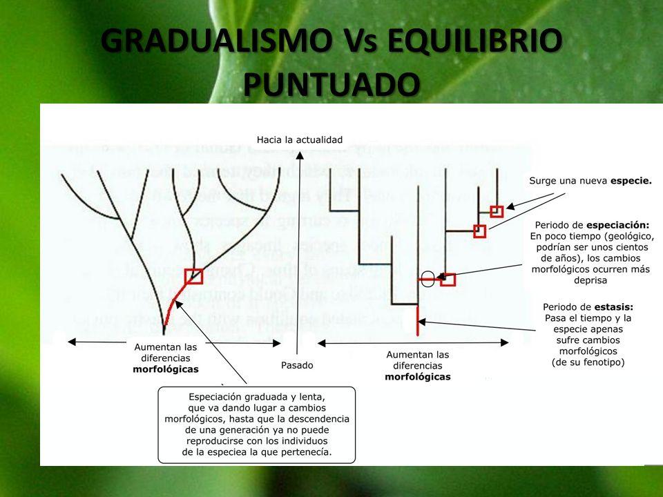 GRADUALISMO Vs EQUILIBRIO PUNTUADO