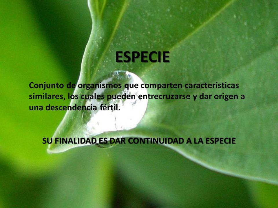 ESPECIE Conjunto de organismos que comparten características similares, los cuales pueden entrecruzarse y dar origen a una descendencia fértil. SU FIN