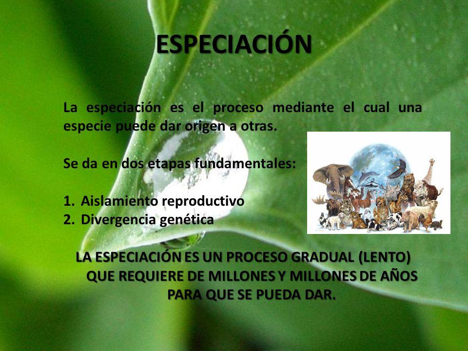 ESPECIACIÓN La especiación es el proceso mediante el cual una especie puede dar origen a otras. Se da en dos etapas fundamentales: 1.Aislamiento repro