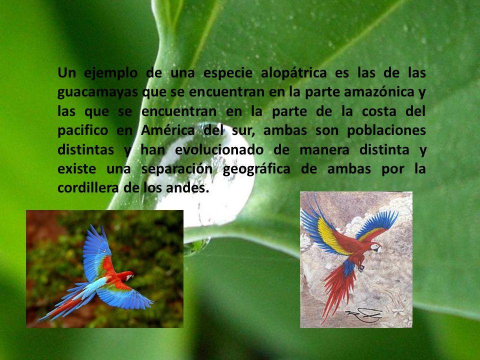 Un ejemplo de una especie alopátrica es las de las guacamayas que se encuentran en la parte amazónica y las que se encuentran en la parte de la costa