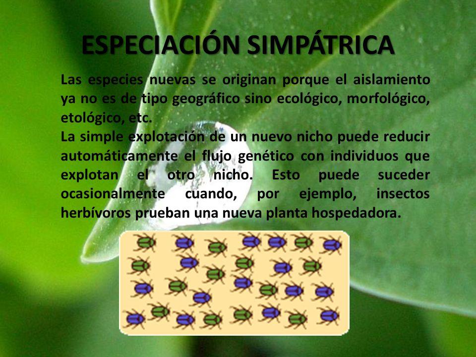 ESPECIACIÓN SIMPÁTRICA Las especies nuevas se originan porque el aislamiento ya no es de tipo geográfico sino ecológico, morfológico, etológico, etc.