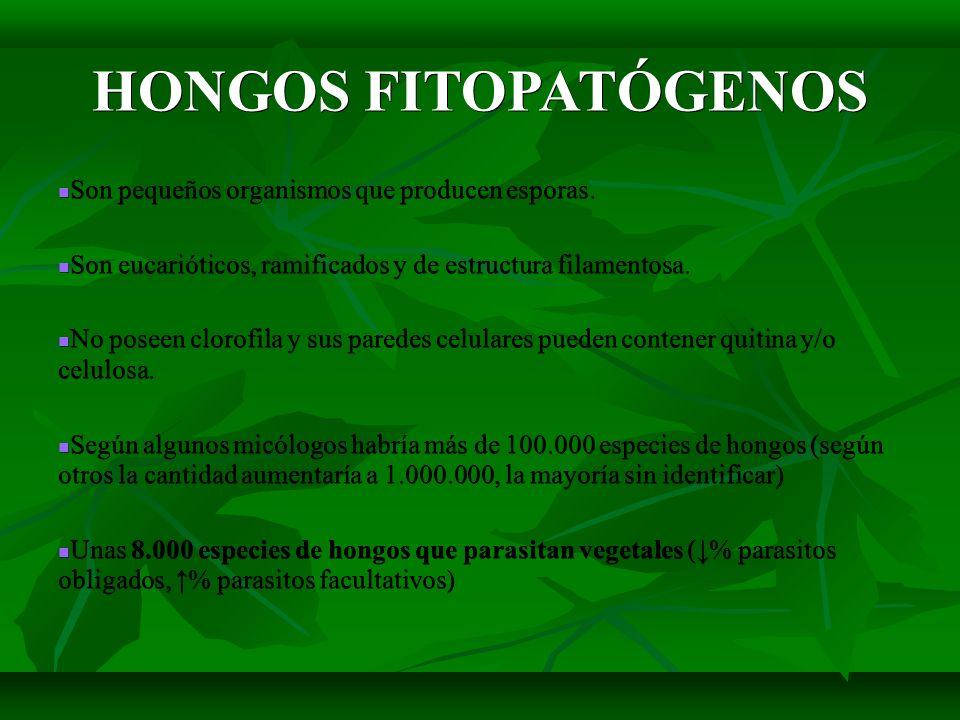 HONGOS FITOPATÓGENOS Son pequeños organismos que producen esporas. Son pequeños organismos que producen esporas. Son eucarióticos, ramificados y de es