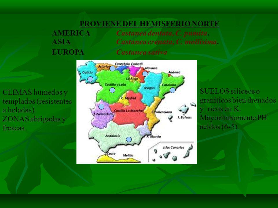 Algunos aspectos determinantes para entender su grado de afección: · Hay muchos castañares puros en la Península Ibérica, a lo que hay que sumar los que vegetan en masas mixtas.