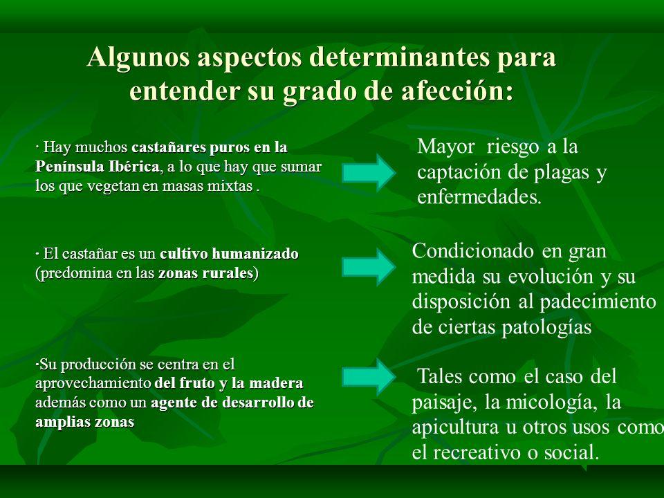Algunos aspectos determinantes para entender su grado de afección: · Hay muchos castañares puros en la Península Ibérica, a lo que hay que sumar los q