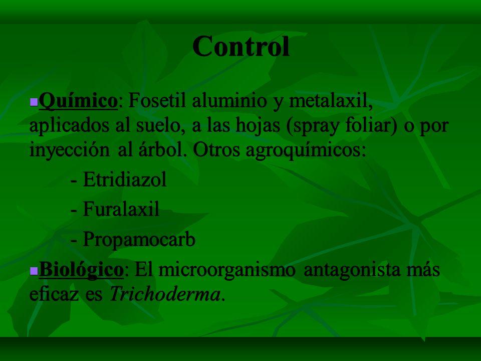 Control Químico: Fosetil aluminio y metalaxil, aplicados al suelo, a las hojas (spray foliar) o por inyección al árbol. Otros agroquímicos: Químico: F