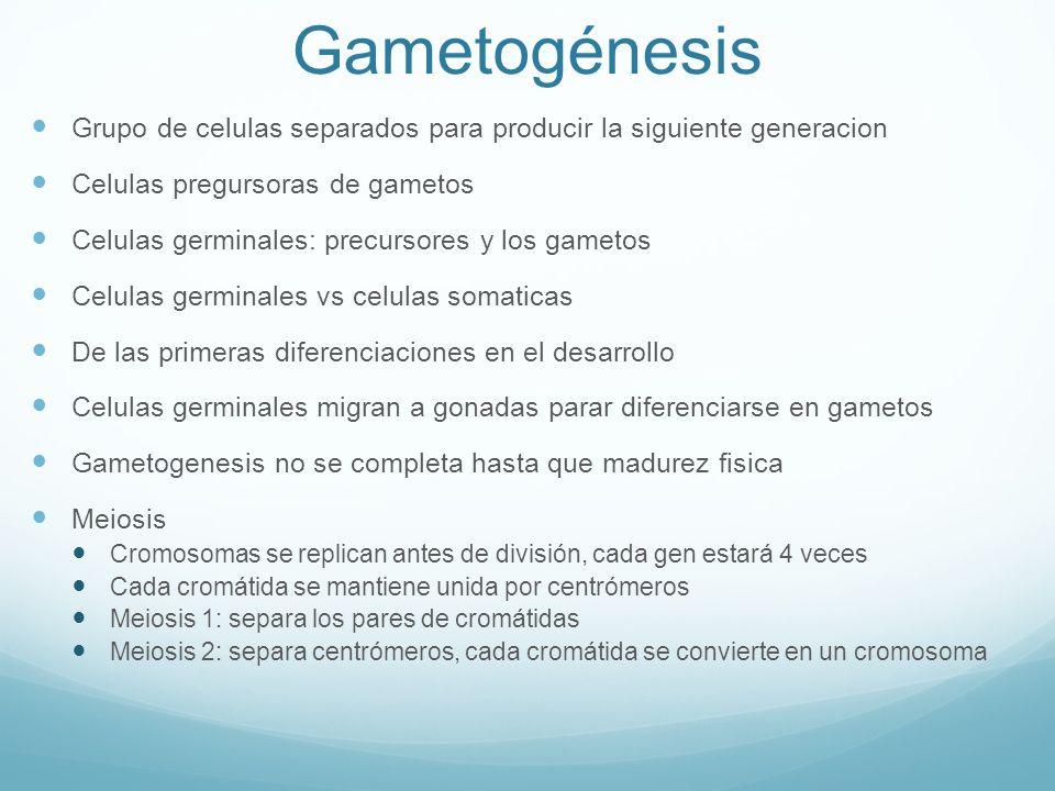 Gametogénesis Grupo de celulas separados para producir la siguiente generacion Celulas pregursoras de gametos Celulas germinales: precursores y los ga