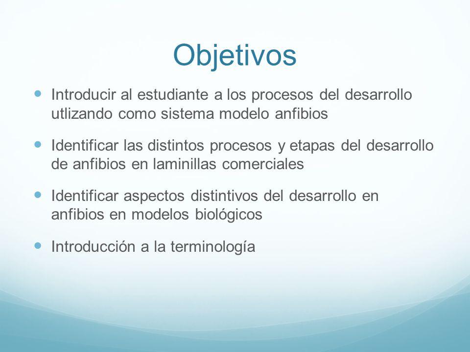 Objetivos Introducir al estudiante a los procesos del desarrollo utlizando como sistema modelo anfibios Identificar las distintos procesos y etapas de