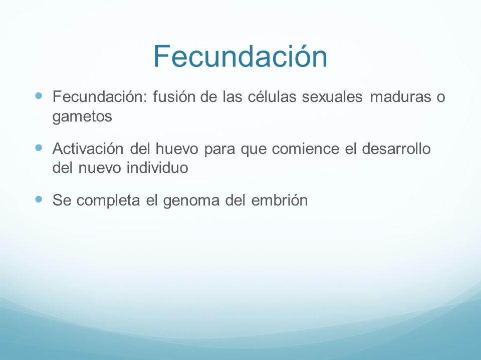 Fecundación Fecundación: fusión de las células sexuales maduras o gametos Activación del huevo para que comience el desarrollo del nuevo individuo Se