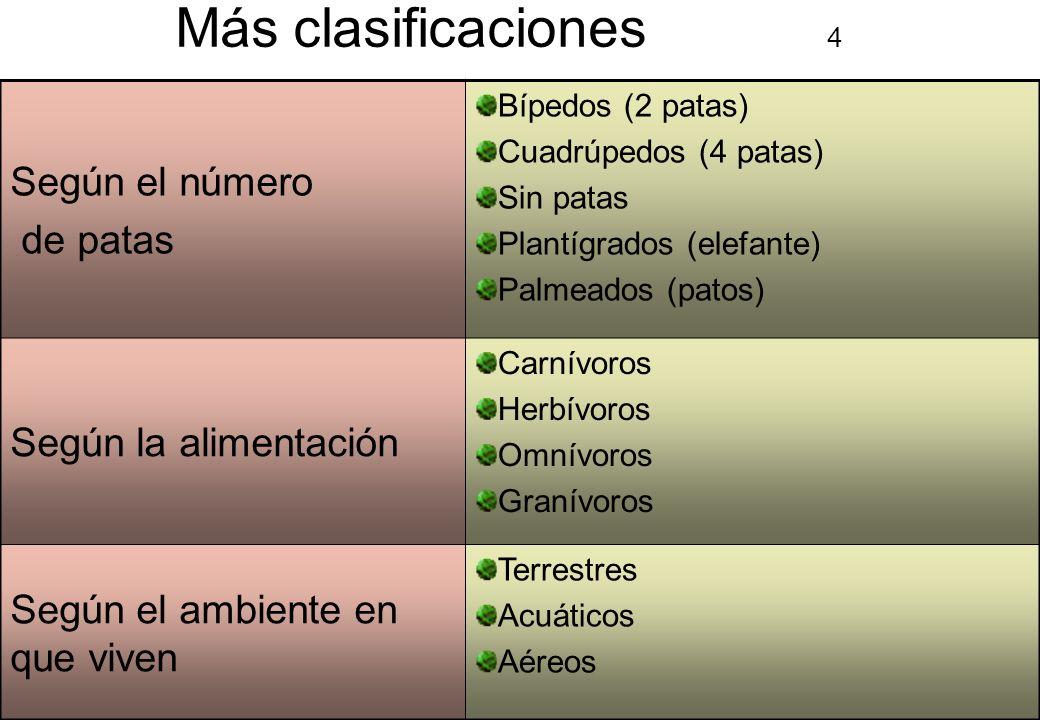 2 Más clasificaciones 4 Según el número de patas Bípedos (2 patas) Cuadrúpedos (4 patas) Sin patas Plantígrados (elefante) Palmeados (patos) Según la