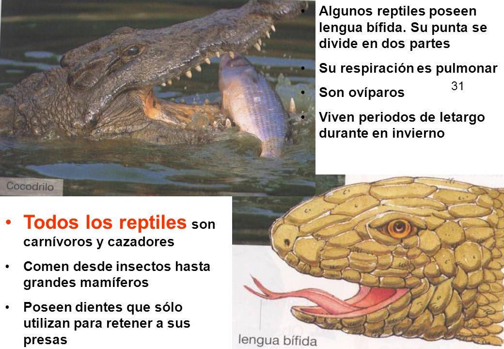 Todos los reptiles son carnívoros y cazadores Comen desde insectos hasta grandes mamíferos Poseen dientes que sólo utilizan para retener a sus presas