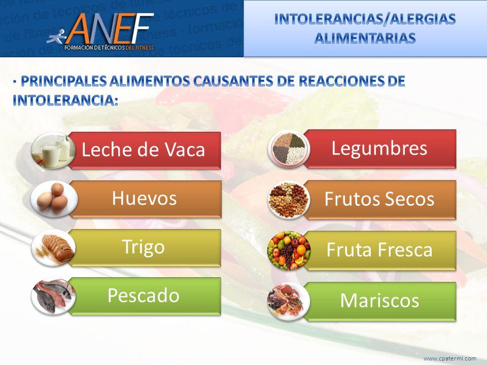 Leche de Vaca Huevos Trigo Pescado Legumbres Frutos Secos Fruta Fresca Mariscos