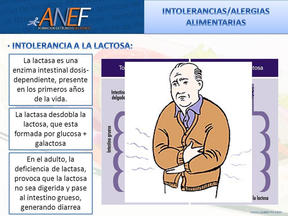 www.cpatermi.com La lactasa es una enzima intestinal dosis- dependiente, presente en los primeros años de la vida. La lactasa desdobla la lactosa, que