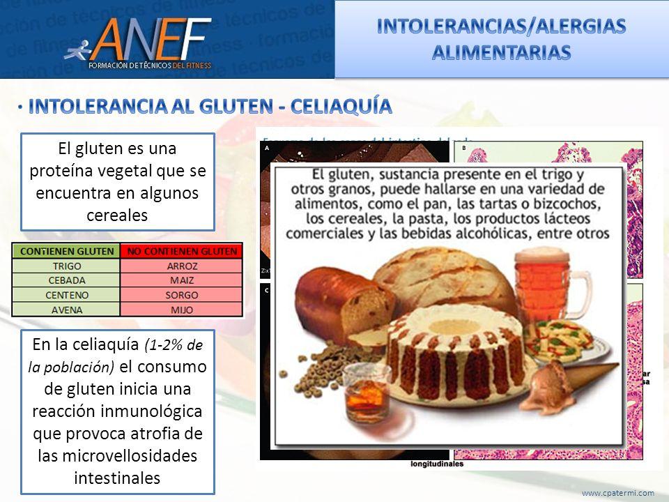 www.cpatermi.com El gluten es una proteína vegetal que se encuentra en algunos cereales En la celiaquía (1-2% de la población) el consumo de gluten in