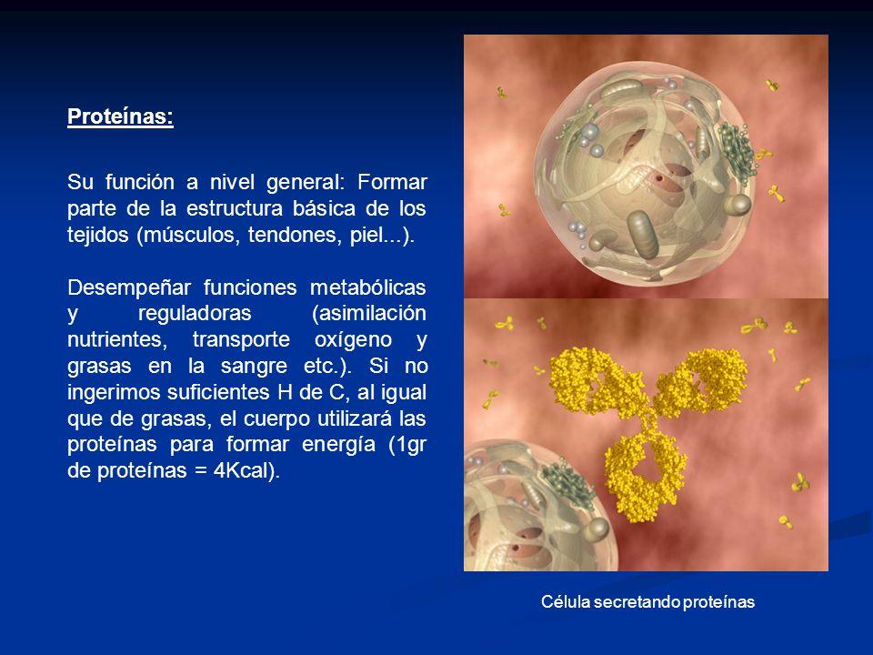 Proteínas: Su función a nivel general: Formar parte de la estructura básica de los tejidos (músculos, tendones, piel...). Desempeñar funciones metaból