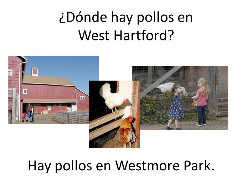 Both from the Latin word OVUM ¿Dónde hay pollos en West Hartford? Hay pollos en Westmore Park.