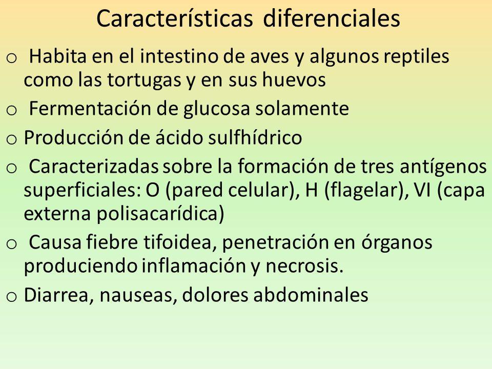 Características diferenciales o Habita en el intestino de aves y algunos reptiles como las tortugas y en sus huevos o Fermentación de glucosa solament