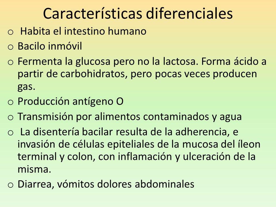Características diferenciales o Habita el intestino humano o Bacilo inmóvil o Fermenta la glucosa pero no la lactosa. Forma ácido a partir de carbohid