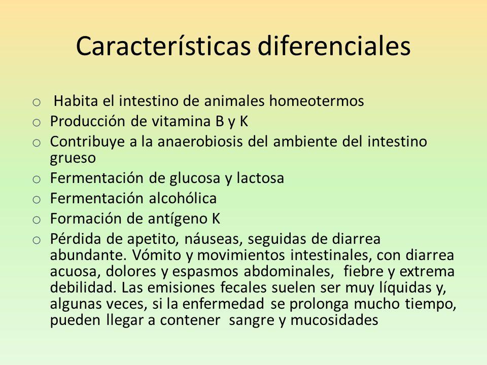 Características diferenciales o Habita el intestino de animales homeotermos o Producción de vitamina B y K o Contribuye a la anaerobiosis del ambiente