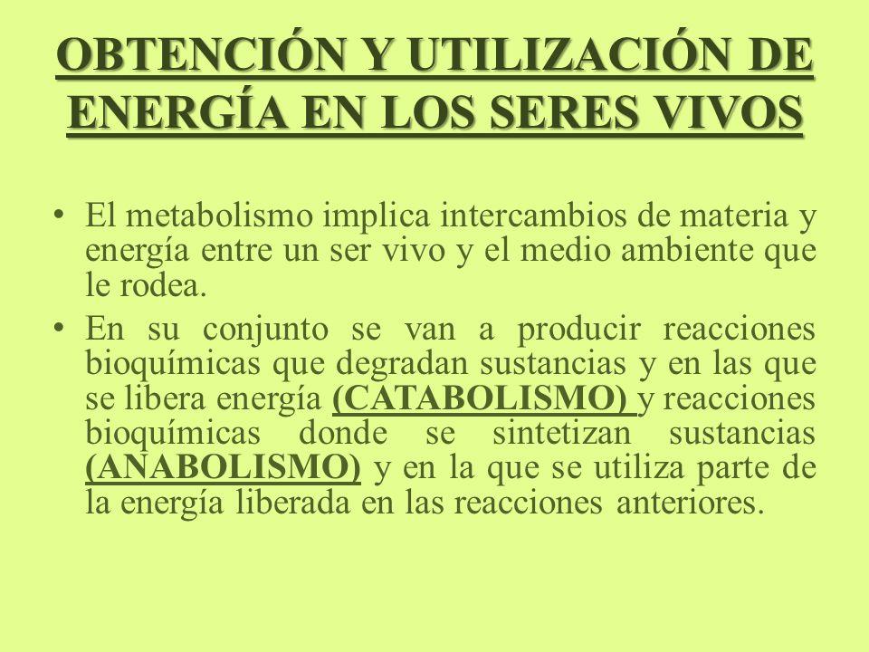 OBTENCIÓN Y UTILIZACIÓN DE ENERGÍA EN LOS SERES VIVOS El metabolismo implica intercambios de materia y energía entre un ser vivo y el medio ambiente q