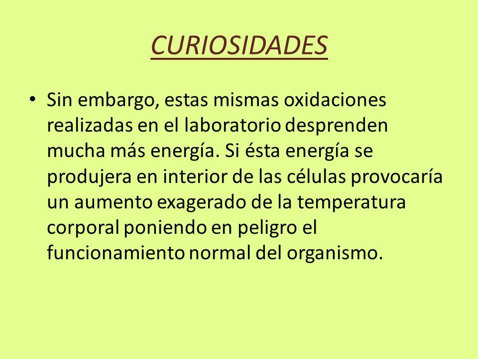 CURIOSIDADES Sin embargo, estas mismas oxidaciones realizadas en el laboratorio desprenden mucha más energía.