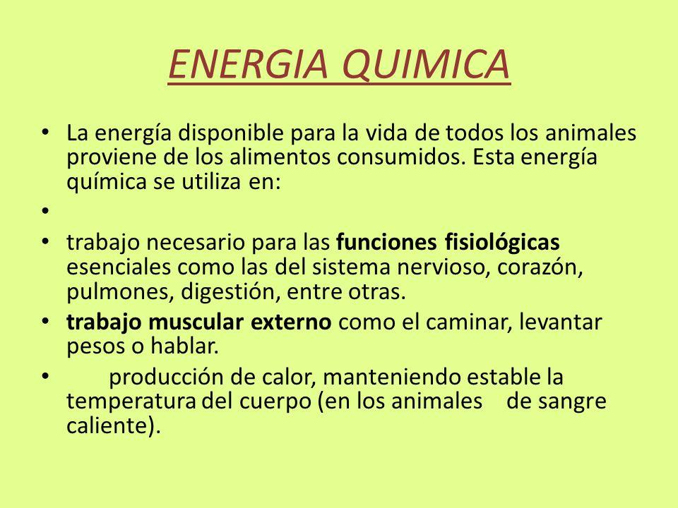 ENERGIA QUIMICA La energía disponible para la vida de todos los animales proviene de los alimentos consumidos. Esta energía química se utiliza en: tra