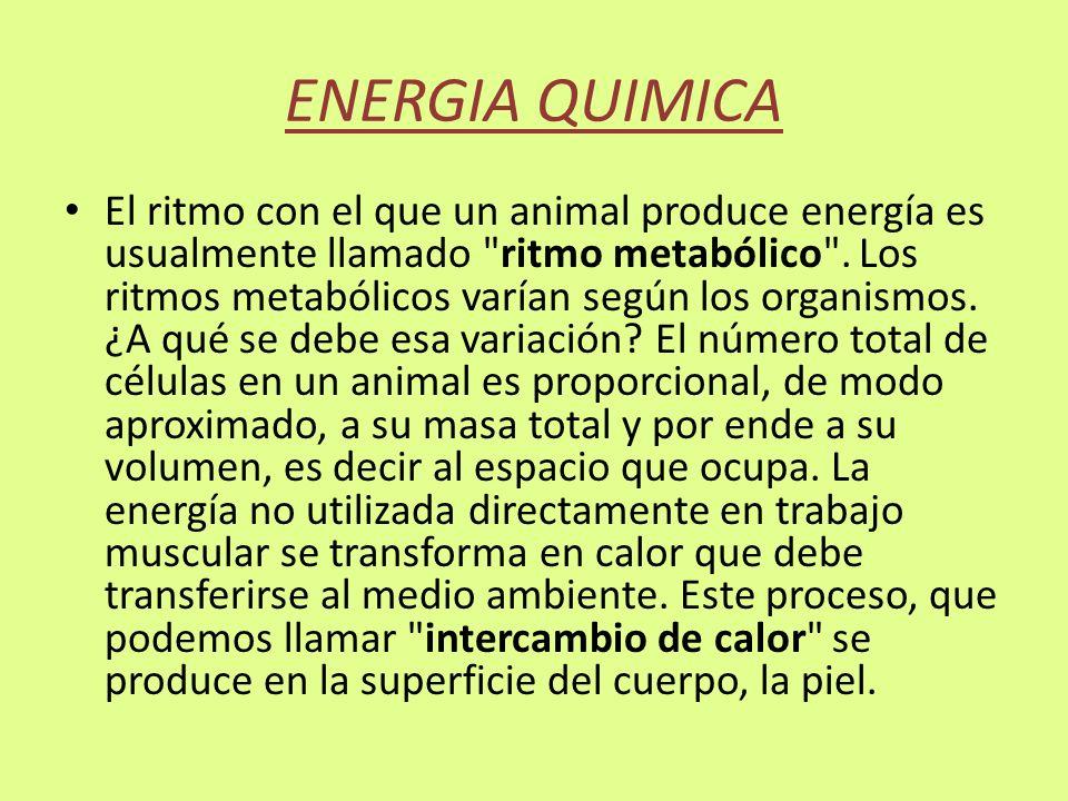 ENERGIA QUIMICA El ritmo con el que un animal produce energía es usualmente llamado
