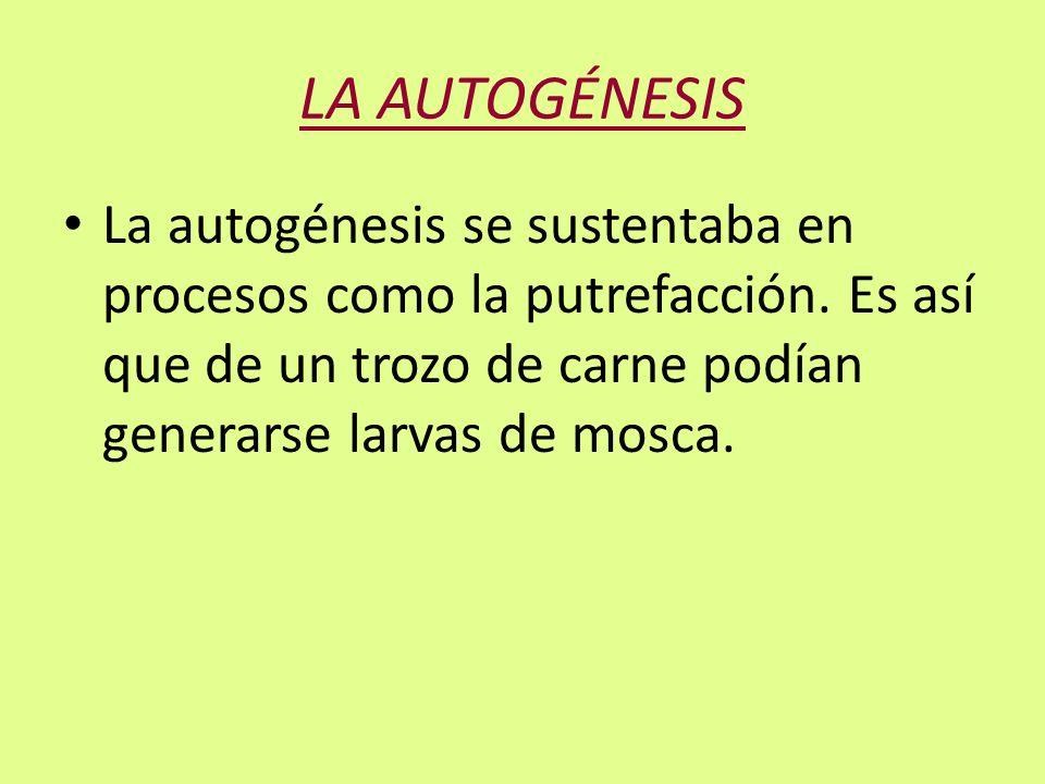 LA AUTOGÉNESIS La autogénesis se sustentaba en procesos como la putrefacción. Es así que de un trozo de carne podían generarse larvas de mosca.