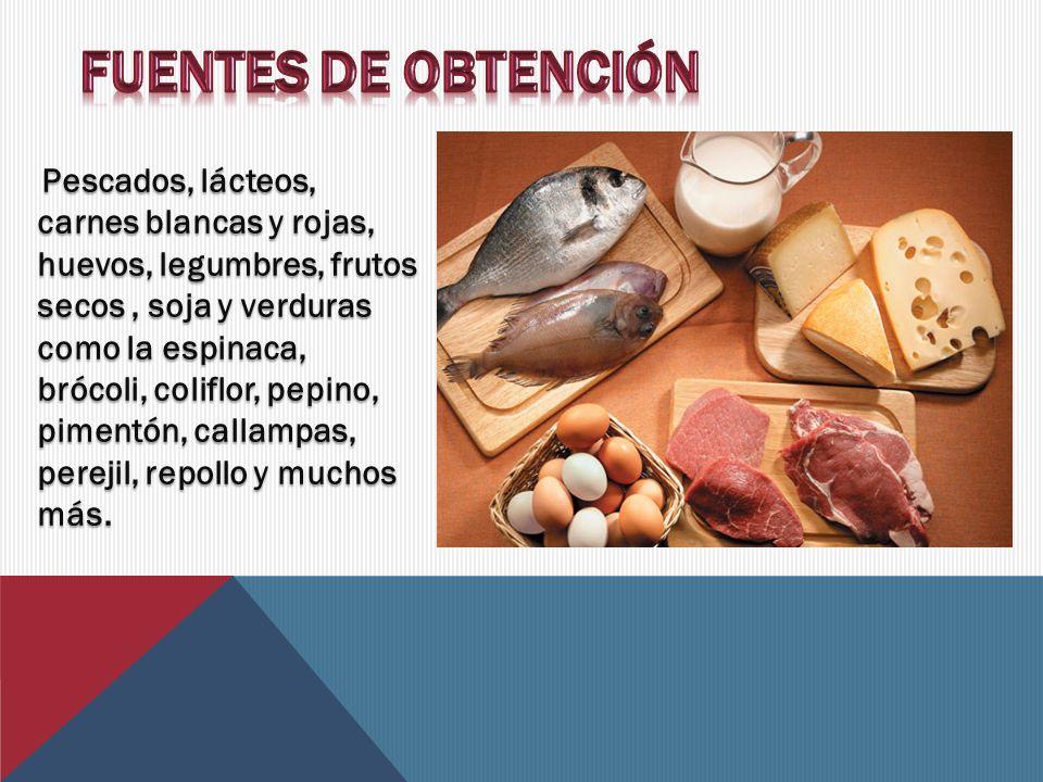 Pescados, lácteos, carnes blancas y rojas, huevos, legumbres, frutos secos, soja y verduras como la espinaca, brócoli, coliflor, pepino, pimentón, callampas, perejil, repollo y muchos más.