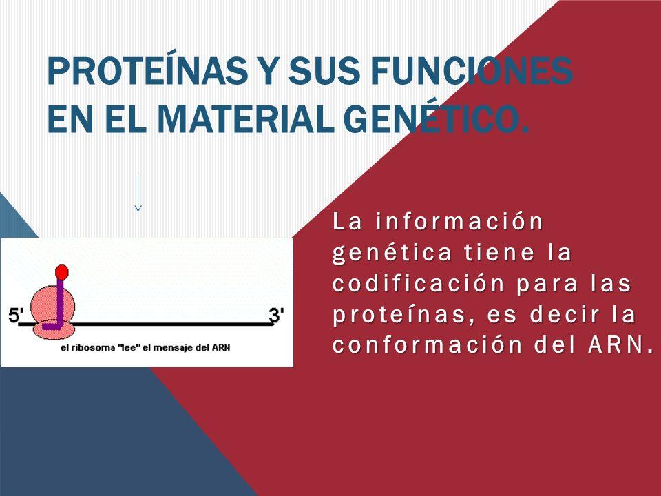 PROTEÍNAS Y SUS FUNCIONES EN EL MATERIAL GENÉTICO.