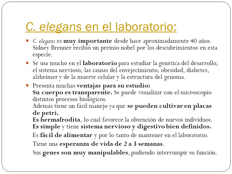 C. elegans en el laboratorio: C. elegans es muy importante desde hace aproximadamente 40 años. Sidney Brenner recibió un premio nobel por los descubri