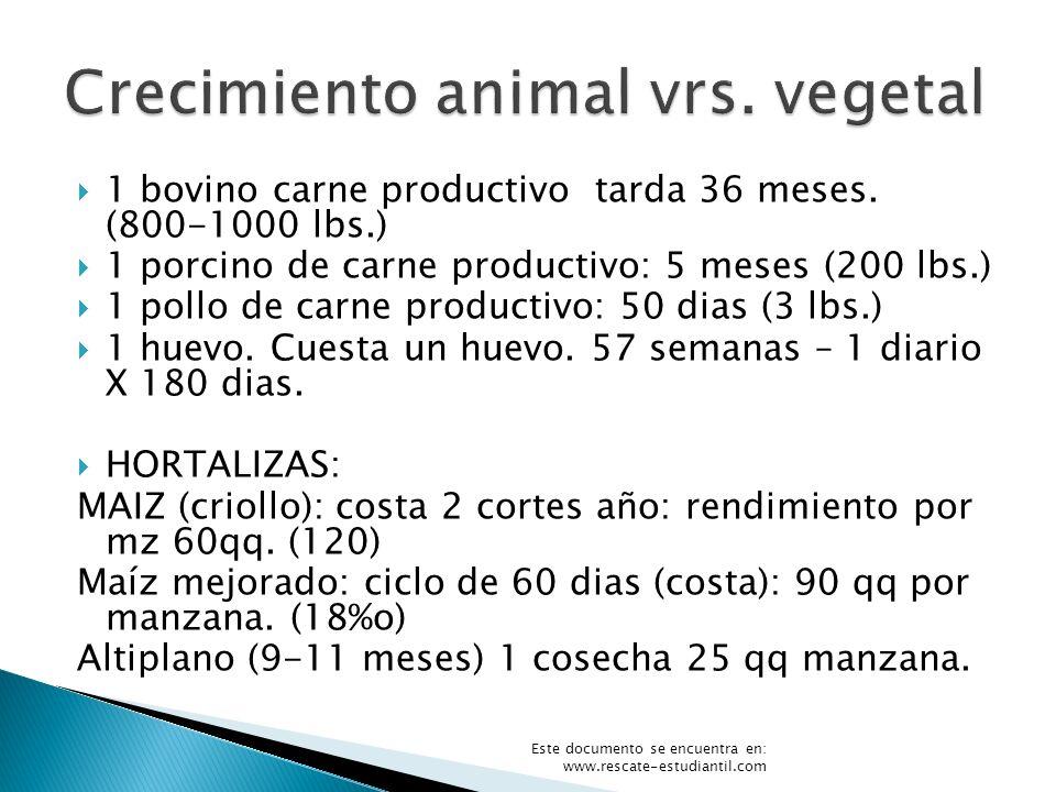 1 bovino carne productivo tarda 36 meses. (800-1000 lbs.) 1 porcino de carne productivo: 5 meses (200 lbs.) 1 pollo de carne productivo: 50 dias (3 lb