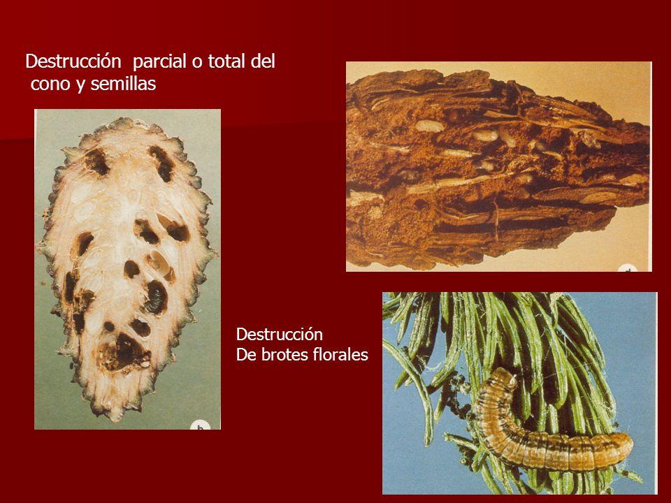 Destrucción parcial o total del cono y semillas Destrucción De brotes florales