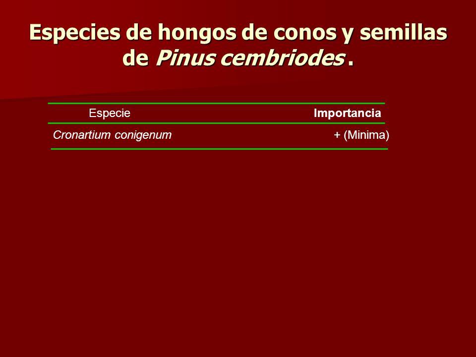 Especies de hongos de conos y semillas de Pinus cembriodes. Especie Importancia Cronartium conigenum + (Minima)