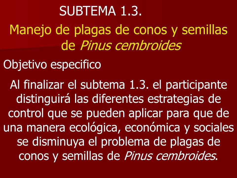SUBTEMA 1.3. Manejo de plagas de conos y semillas de Pinus cembroides Objetivo especifico Al finalizar el subtema 1.3. el participante distinguirá las