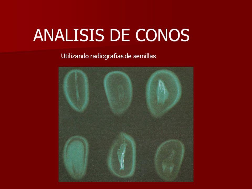 ANALISIS DE CONOS Utilizando radiografias de semillas