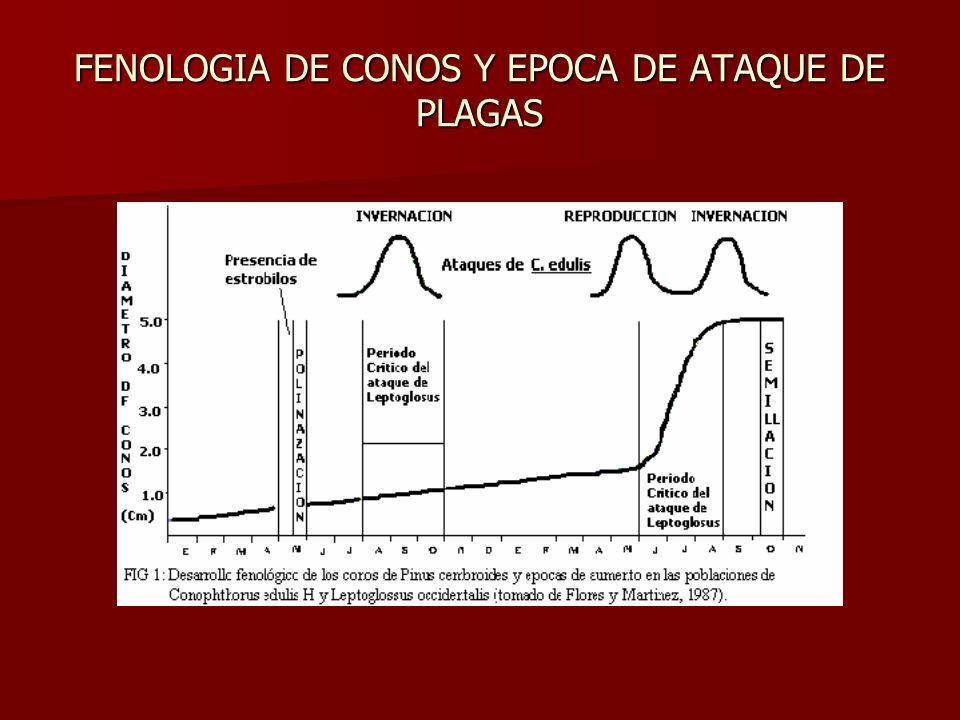 FENOLOGIA DE CONOS Y EPOCA DE ATAQUE DE PLAGAS