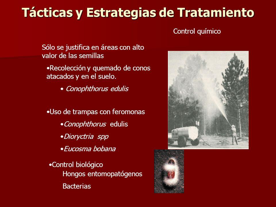 Tácticas y Estrategias de Tratamiento Sólo se justifica en áreas con alto valor de las semillas Recolección y quemado de conos atacados y en el suelo.