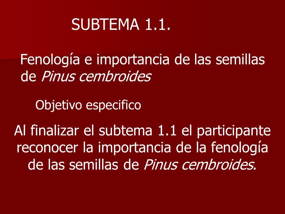 SUBTEMA 1.1. Fenología e importancia de las semillas de Pinus cembroides Objetivo especifico Al finalizar el subtema 1.1 el participante reconocer la