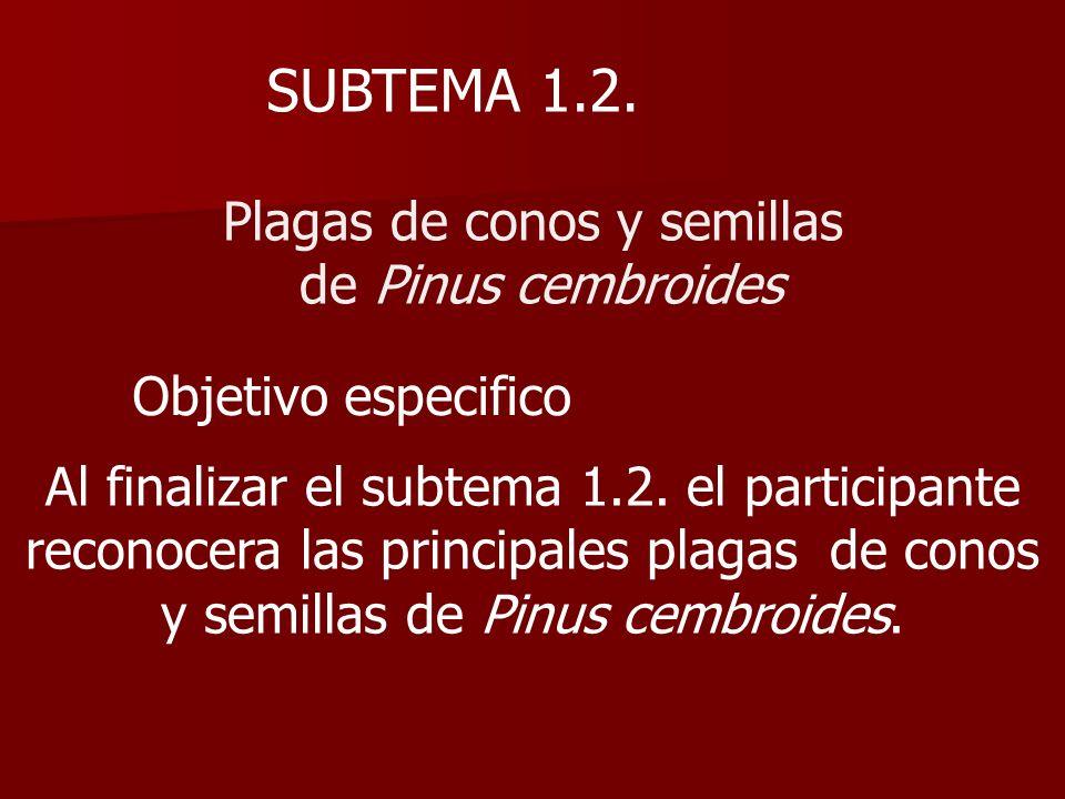 SUBTEMA 1.2. Plagas de conos y semillas de Pinus cembroides Objetivo especifico Al finalizar el subtema 1.2. el participante reconocera las principale