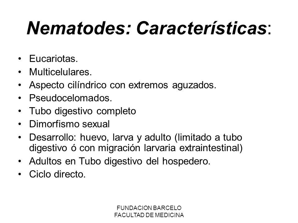 FUNDACION BARCELO FACULTAD DE MEDICINA Fuentes de infección Suelos contaminados por fecalismo (geohelmintos): Áscaris lumbricoides, Strongyloides stercolaris, Trichuris, trichura, uncinarias.
