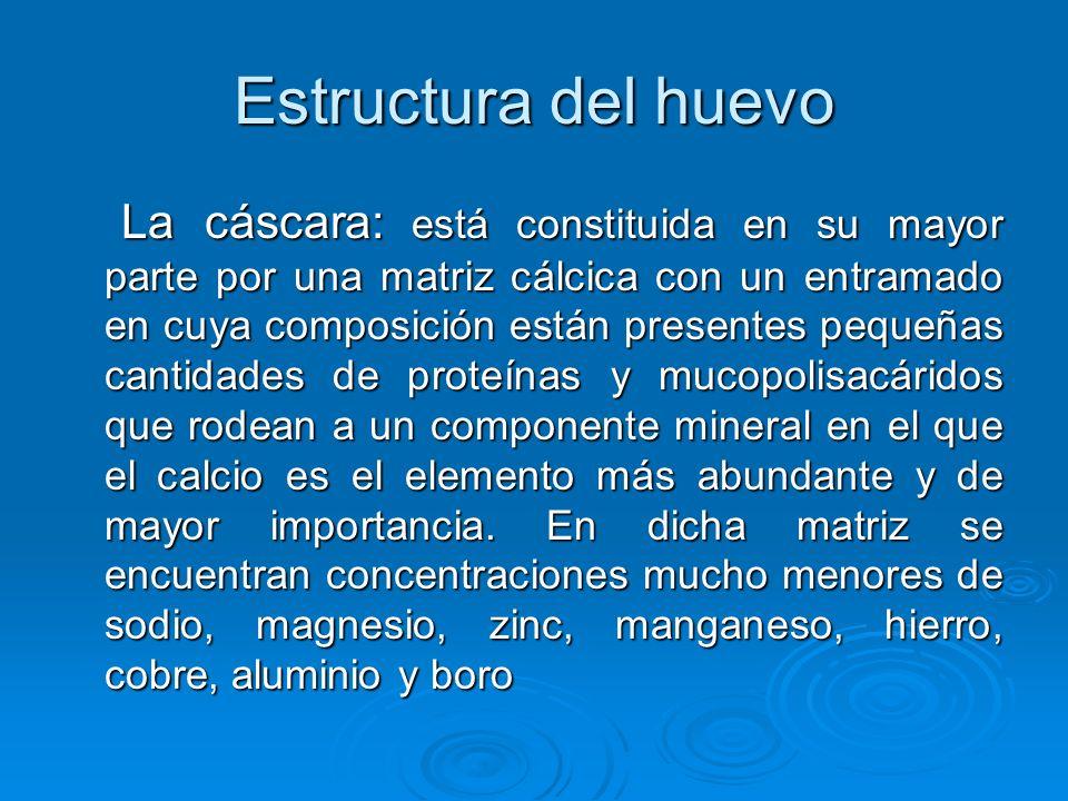 Estructura del huevo La cáscara: está constituida en su mayor parte por una matriz cálcica con un entramado en cuya composición están presentes pequeñas cantidades de proteínas y mucopolisacáridos que rodean a un componente mineral en el que el calcio es el elemento más abundante y de mayor importancia.