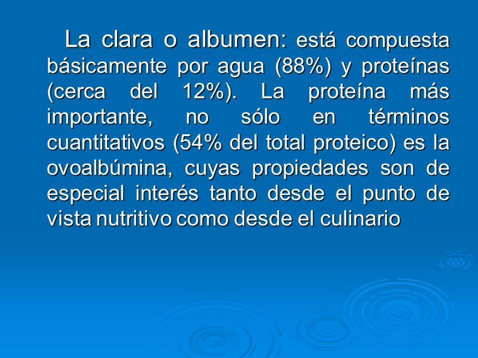 La clara o albumen: está compuesta básicamente por agua (88%) y proteínas (cerca del 12%). La proteína más importante, no sólo en términos cuantitativ